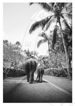 LOVE WARRIORS - ELEPHANT WALK, 50×70 CM